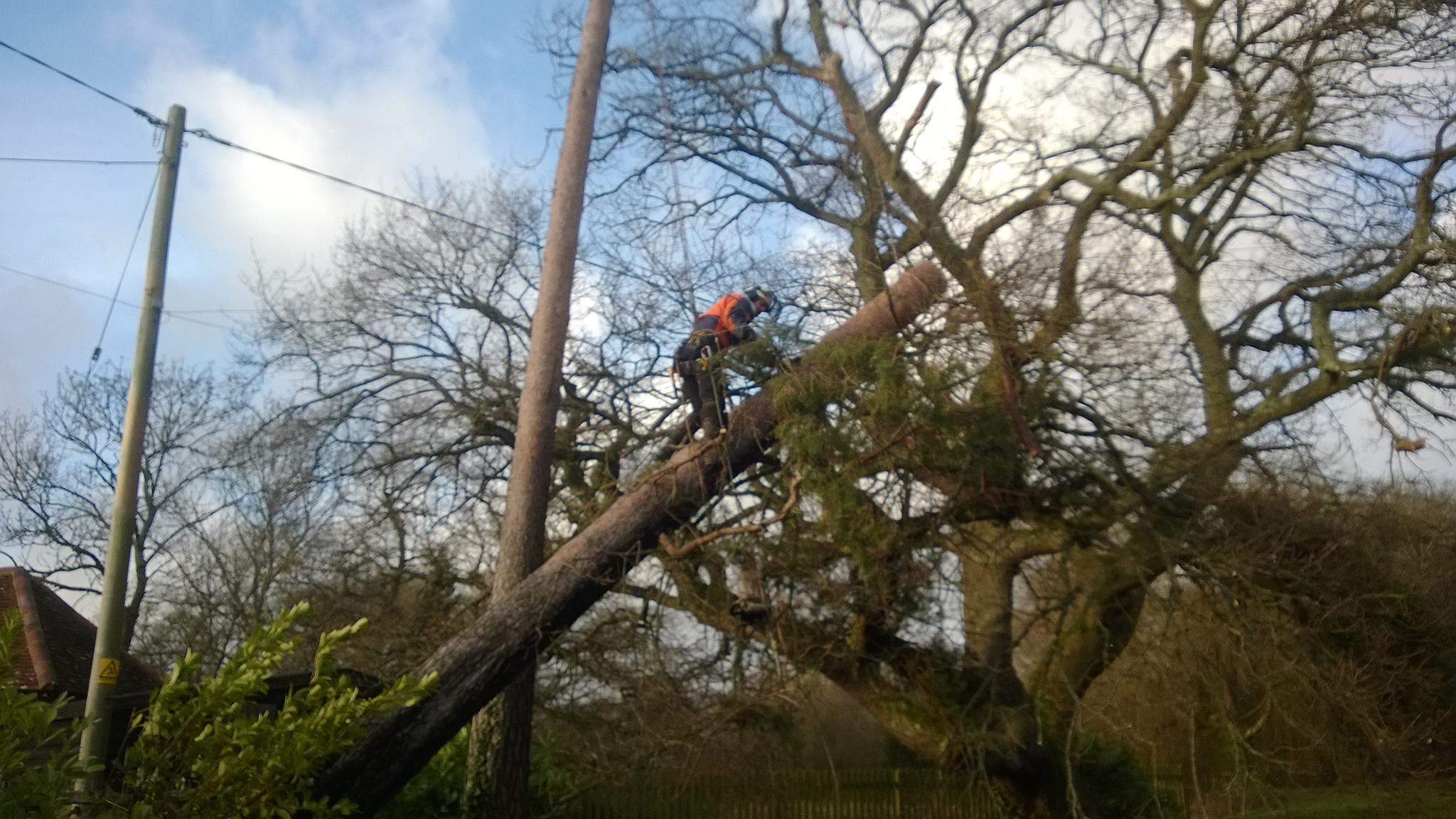 dangerous tree removal comox valley
