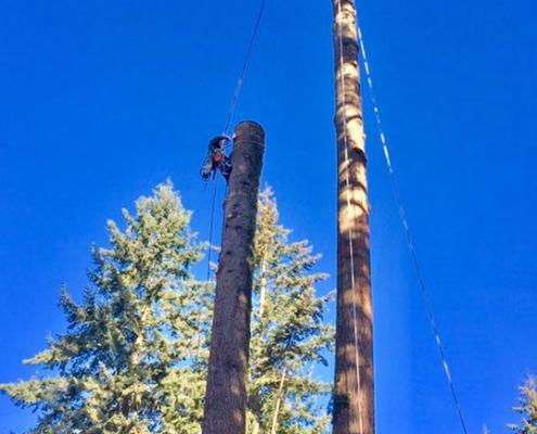 tree removal service comox valley
