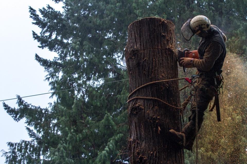 Comox Valley Tree Services