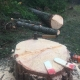 tree removal comox valley