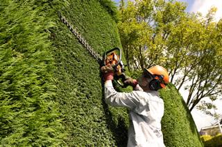 hedge trimming comox valley