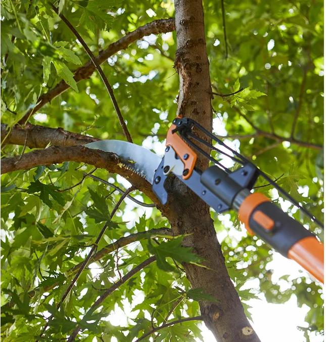 tree pruning comox valley