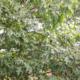 Cumberland Trees