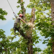 tree pruning terms comox valley